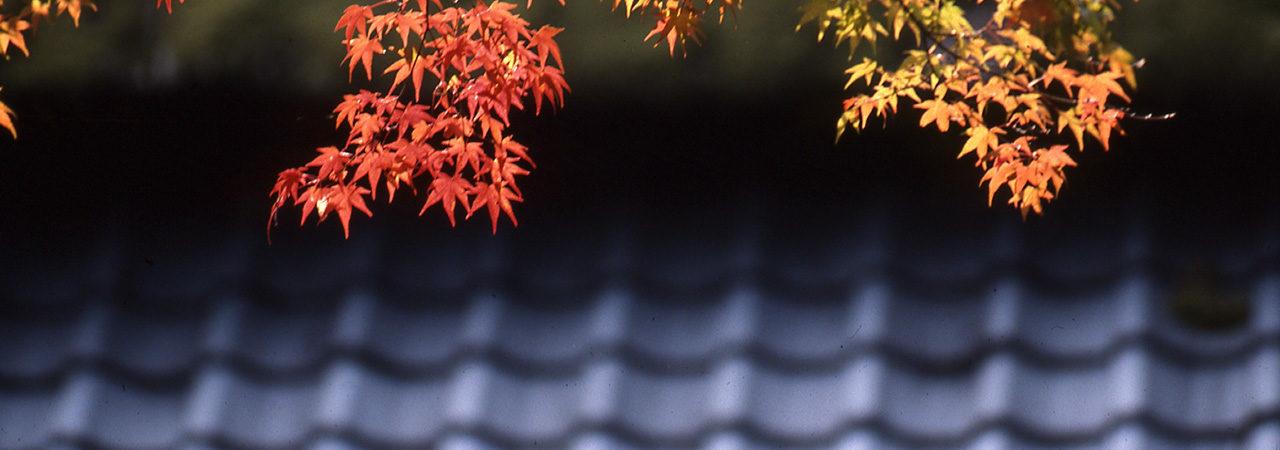 Saison du Kooyoo au Japon